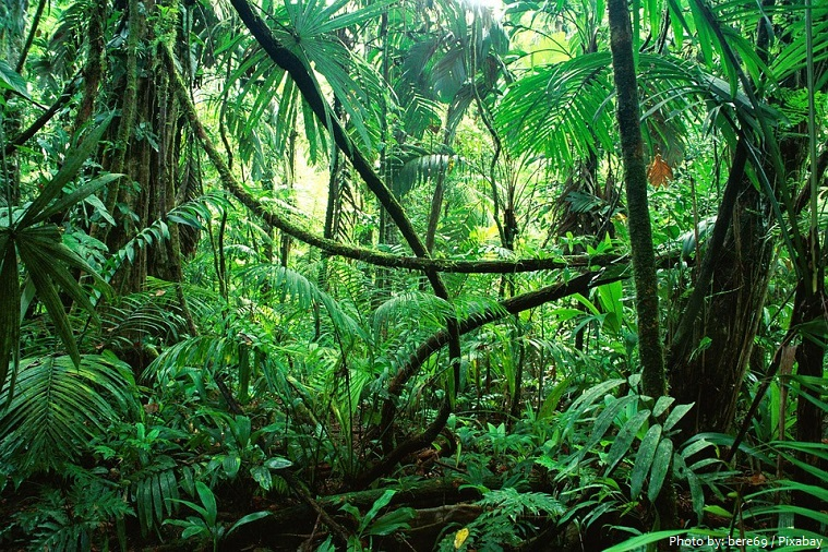 Interesting Facts About Jungles Just Fun Facts