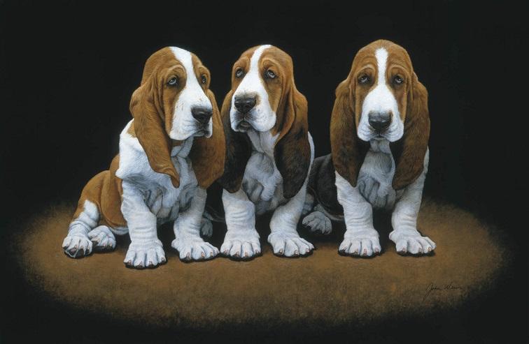 basset-hounds-2