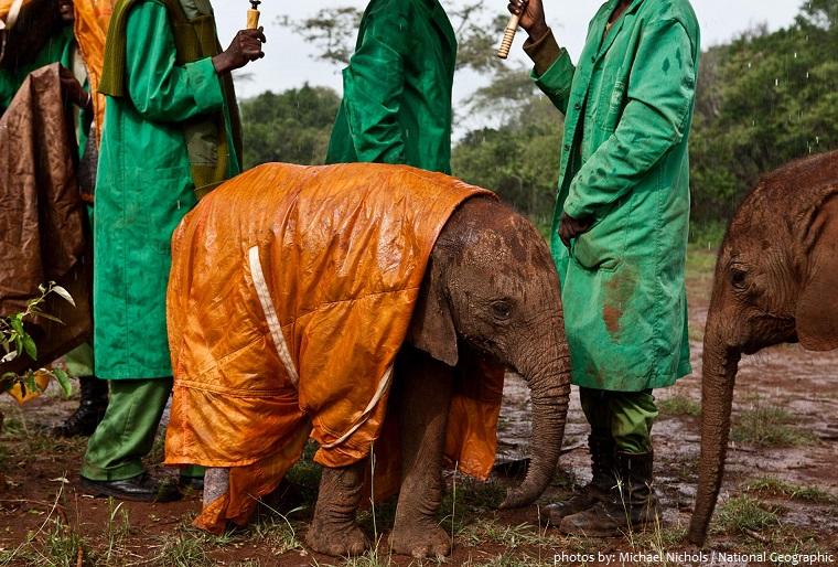 elephant and rhino nursery