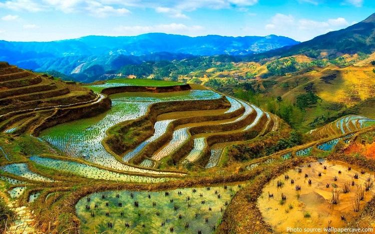 rice-terraces-2