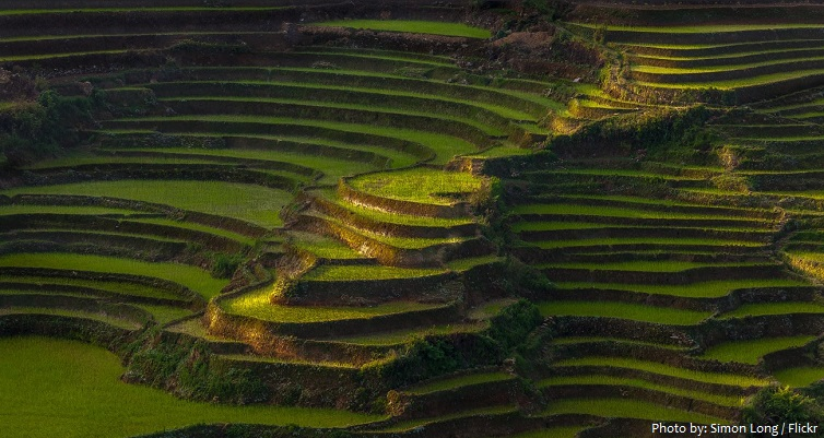 rice-terraces-3