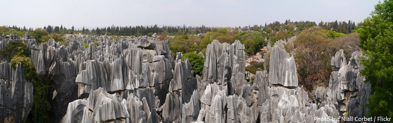stone-forest-3