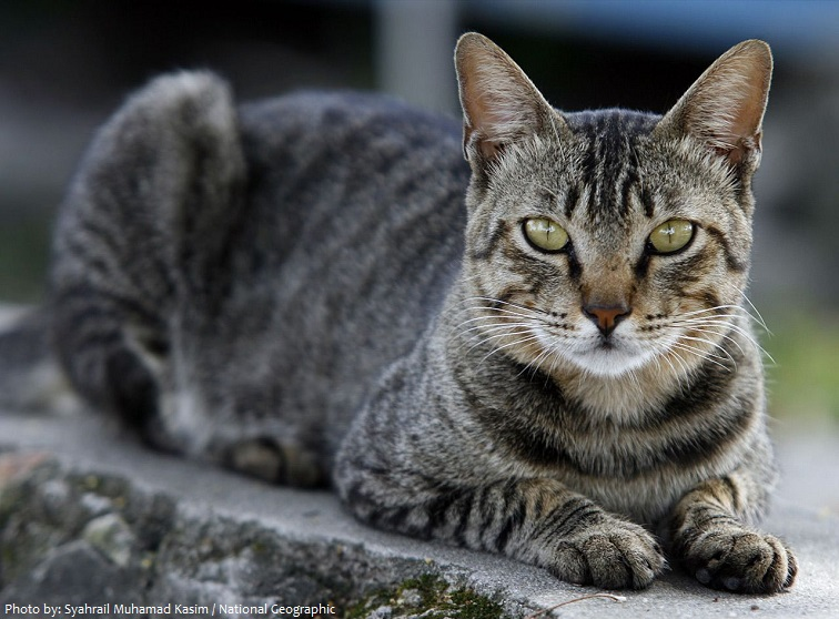 tabby-cat-2