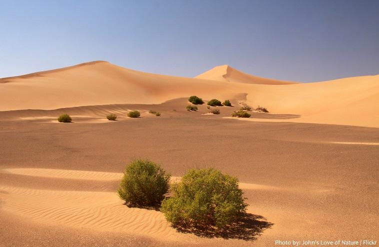 arabian desert plants