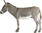 donkey-11
