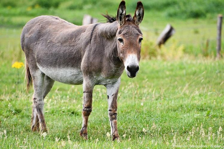 donkey-5