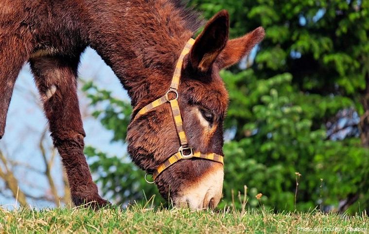 donkey-7