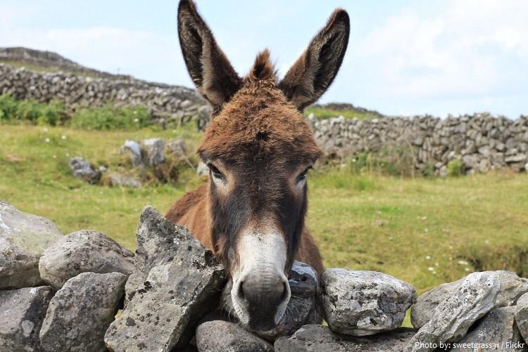 donkey-9