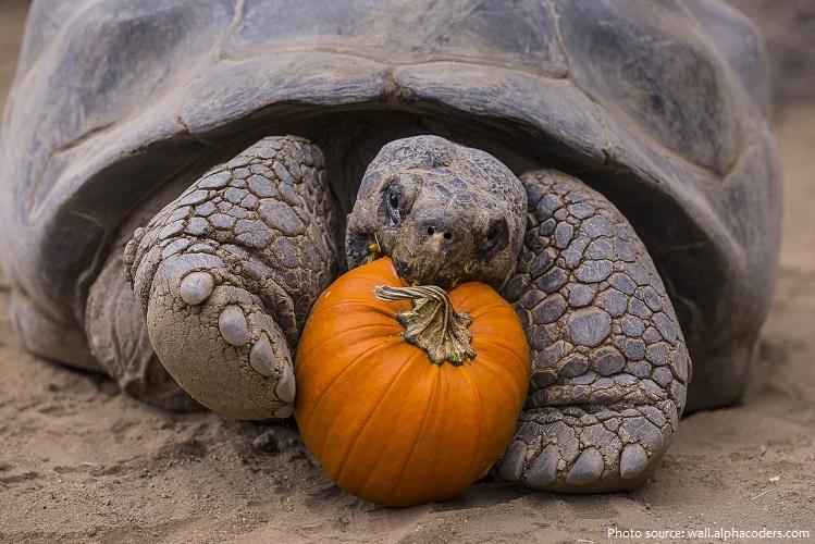 giant-tortoise-3