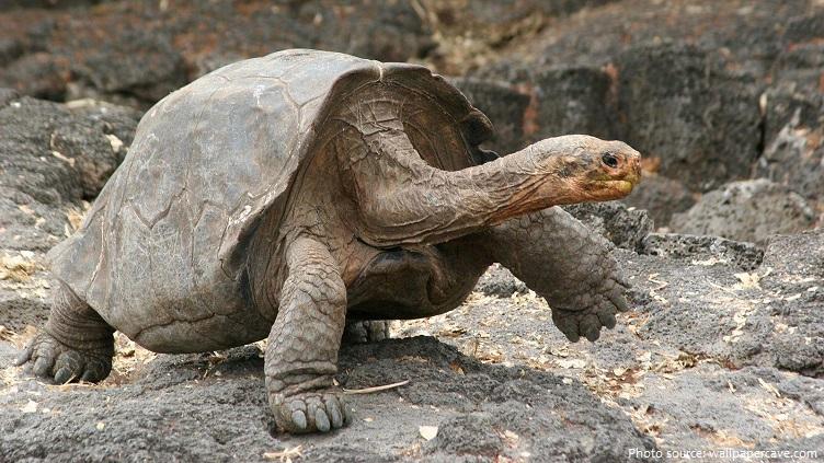 giant-tortoise-5