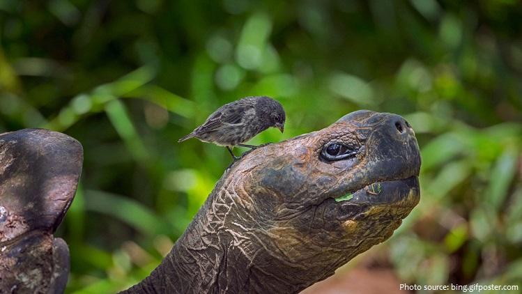 giant-tortoise-6