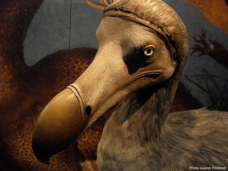 dodo-5