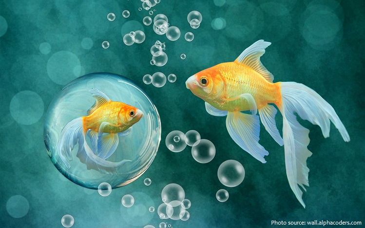 goldfish-7