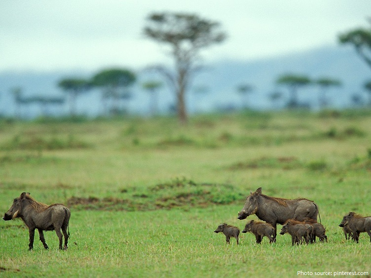 warthog-7