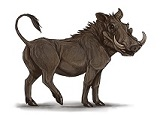 warthog-8